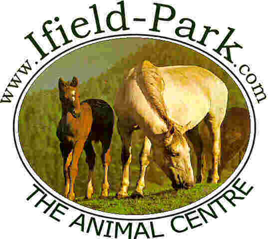 Ifield Park Animal Centre is a family run business that has everything for you pet.  Whether it is a horse, cow, pig, dog, cat, ferret, pigeon, sheep, pheasant or another favoured animal we will probably have what you are looking for.  Call us on 0845 1 300 460